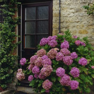 Hydrangeas Door