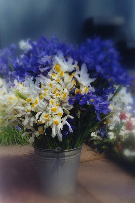 Iris Bucket